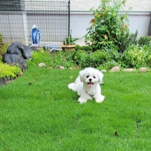 TM9という芝を張ってみた ☆彡