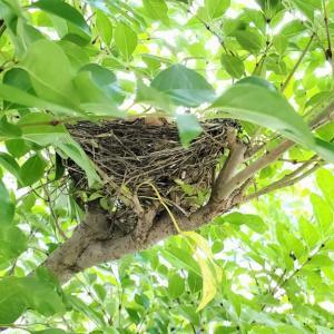 玄関先に小鳥の巣 (^^♪