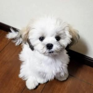 台風と戦う子犬のMaru (^^♪