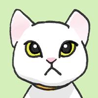 迷子猫 捜索方法についてのまとめと役立つサイトの紹介