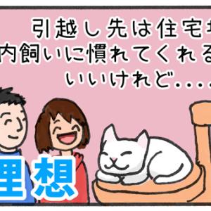 【迷子猫探しの記録1】猫を連れて引っ越しすることになった!