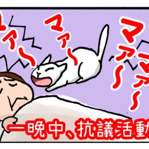 【迷子猫探しの記録2】猫の引っ越しは無事終了。だがしかし