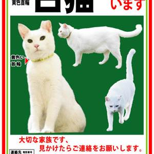 迷子ペットのポスター チラシ デザイン