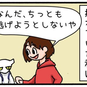【迷子猫探しの記録3】逃した!