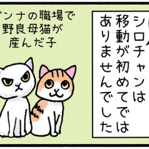 【迷子猫探しの記録5】シロチャンの逃亡は二度目