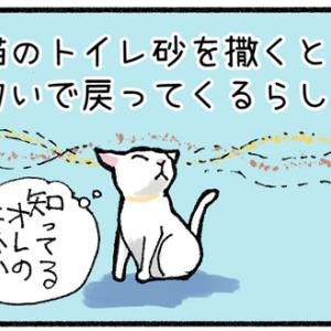 【迷子猫探しの記録8】匂いのもと