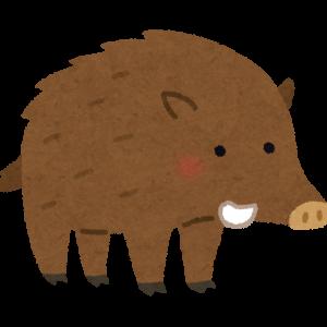 半分食われた状態のイノシシ発見→ベア「まだ食べられます」w