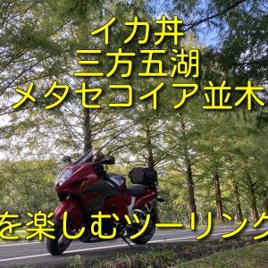 【大阪発日帰りソロツー】イカ丼を食べて三方五湖とメタセコイア並木を見るツーリング【ドライブインよしだ】