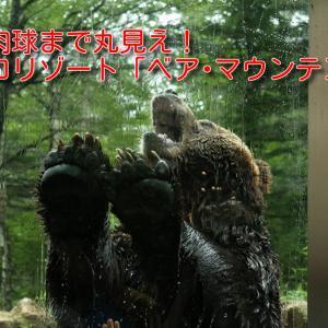 【北海道おすすめスポット】熊の肉球まで丸見え!ベア・マウンテンに行ってきました!