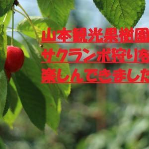 【北海道おすすめスポット】山本観光果樹園でサクランボ狩りを楽しんできました♪