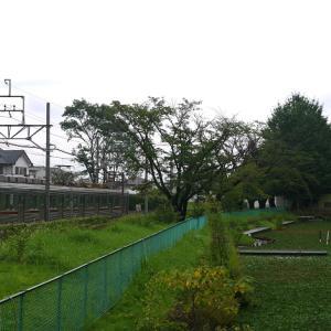 訪城記 ~小泉城~ 【2020.07.24】
