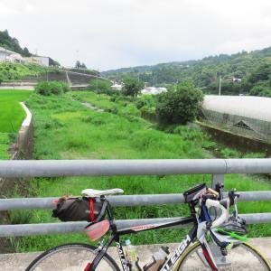 大川原高原のアジサイは、見頃でした
