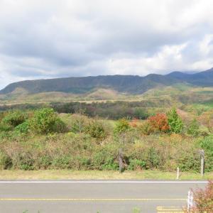 大山 鍵掛峠は、紅葉あと少し。木谷沢渓流は、苔むしていいですね。