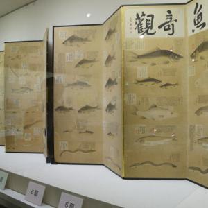 京都新聞『屏風に湖の魚89種類、江戸時代に彦根藩士が描く 滋賀で展示』