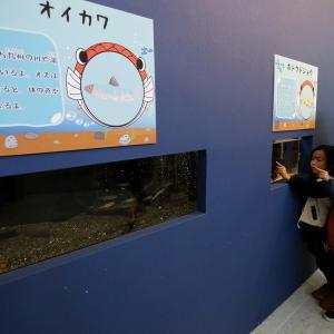 長崎新聞『海きららで特別展 コイの仲間 30種500匹展示』
