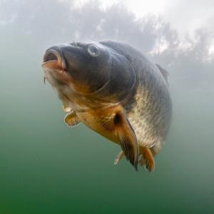 ニューズウィーク日本版『孤立した湖や池に魚はどうやって移動する? ようやくプロセスが明らかに』