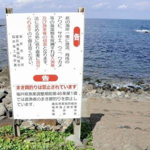 福井新聞ONLINE『まき餌釣り禁止…福井、東京、茨城だけに残る規則 福井は12月解禁も』