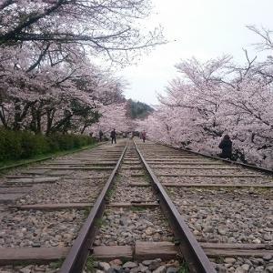 【番外編】京都お花見ジョグ(2020/3/30) 左京区編~桜の姿に春を知る~