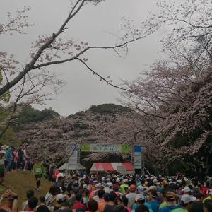 第12回掛川・新茶マラソン(2017/4/9) 公式が名物は「坂」と言い切るこの大会!ハードモードでレベルアップだ!
