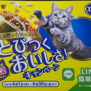 日本ペットフード「キミを呼ぶ合図はコンボ とびつくおいしさ!キャンペーン」