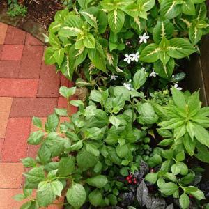 8月の庭 part2