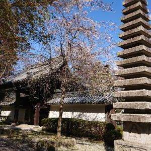 滋賀県 西教寺《旅回顧録》