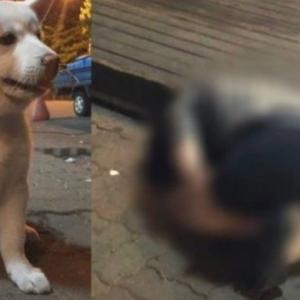 飲食店の前の歩道で子犬に発情した韓国の20代男!