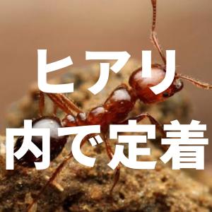 ヒアリが国内で定着?東京都の青海埠頭で女王アリ50匹以上見つかる