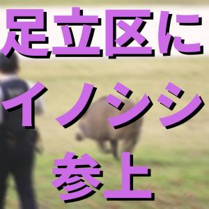 【猪速報】東京都足立区の河川敷にイノシシ出現。区は「決して近寄らず身の安全を確保してほしい」と注意呼びかけ