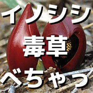 イノシシが毒草を食べちゃった結果