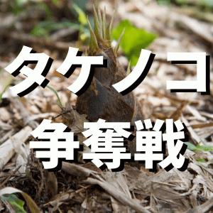 イノシシと競争に タケノコ収穫最盛期