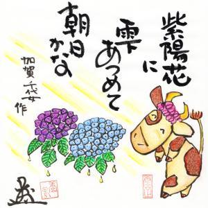 紫陽花(あじさい)に雫(しずく)あつめて朝日かな☆