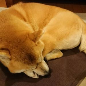ひな 疲れて(?)早くもお休み~
