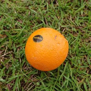 「ひなとオレンジ」