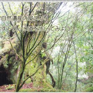 世界自然遺産 屋久島を歩こう! 屋久島への行き方や登山ルート