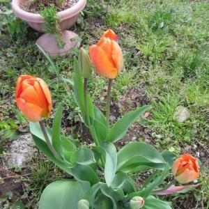 近場の花見ツー。その1