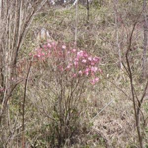 近場の花見ツー。その2