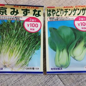 野菜の水耕栽培にチャレンジ!