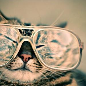 猫にもいろんな性格がある