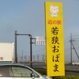 丹波篠山黒大豆収穫体験/アクア