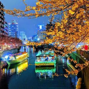 大岡川の桜2019