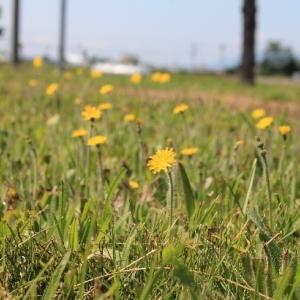 夏の風を感じ、花を愛でる