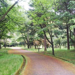 白山市「樹木公園」の風景