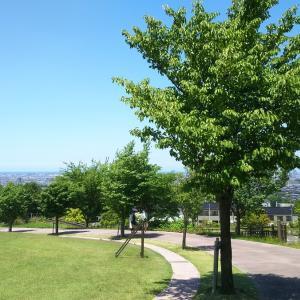 梅雨の紫陽花と鮮やかな緑 金沢市「大乗寺丘陵公園」