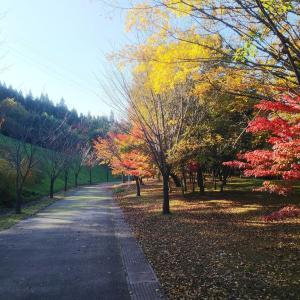 秋深まる大乗寺の丘  金沢市「大乗寺丘陵公園」