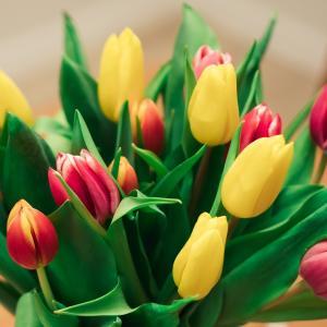 シューマン:交響曲第1番「春」【その特徴と名盤を解説】春を迎えるよろこび!