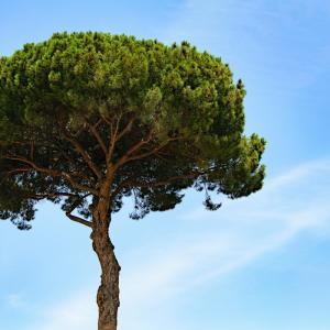 レスピーギ:ローマの松【3枚の名盤】絢爛豪華!ローマの街を音楽で駆け抜ける!!