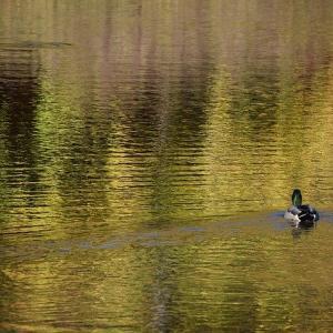 ドビュッシー:水の反映《映像第1集より》【名盤解説と感想特徴】疲れた心をそっと癒やしてくれる1曲