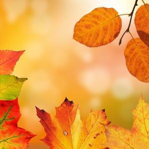 秋に聴きたい【おすすめクラシック15選】:秋に聴く癒しのピアノとオーケストラ