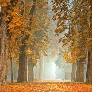 モーツァルト:弦楽四重奏曲第15番【感想|解説と名盤3選】日々の中に、ふとやってくる寂しさ…